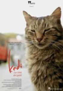 kedi la città dei gatti - poster- dreamingcinema